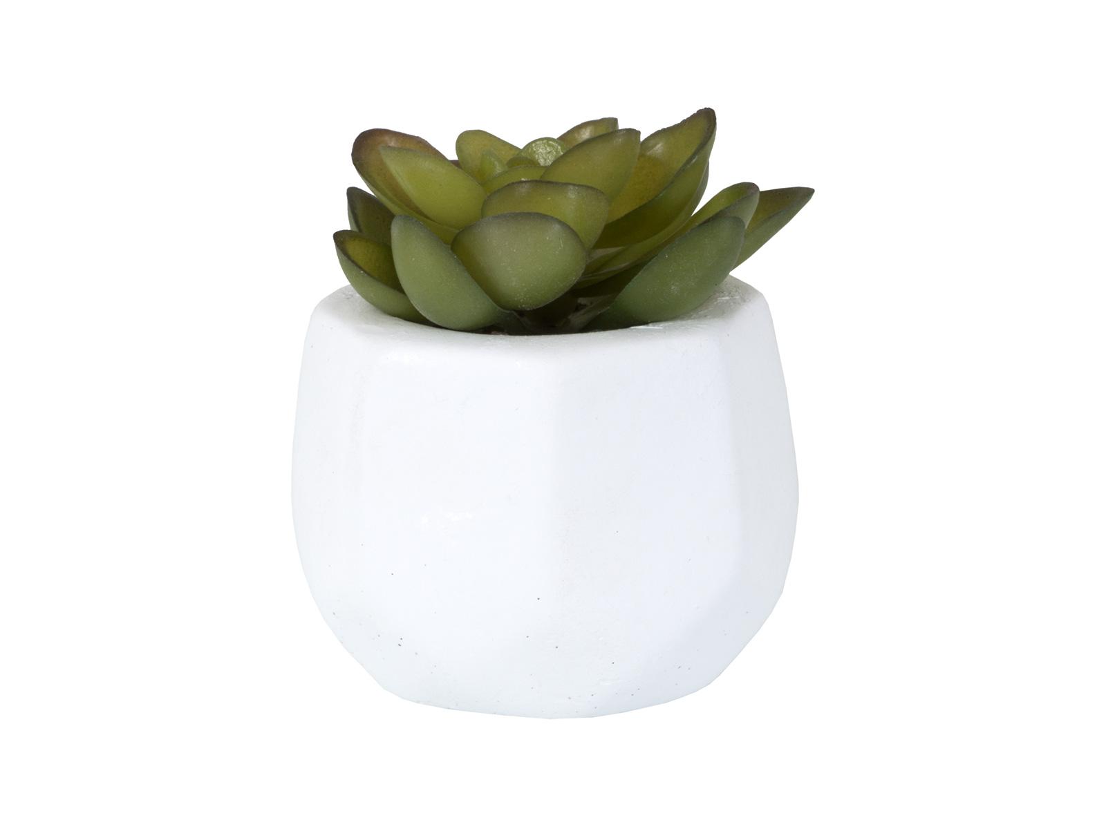 Растение в горшке PlantЦветы<br>Растение декоративное в горшке<br>